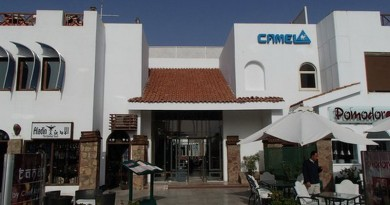 camel dive club