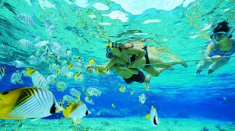 snorkeling in sharm el shiekh
